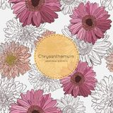 Teste padrão sem emenda com flores do crisântemo Ilustração do vetor Imagem de Stock Royalty Free