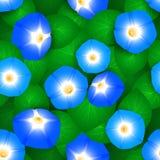 Teste padrão sem emenda com flores do ipomoea Foto de Stock