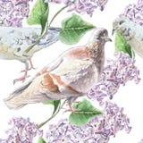 Teste padrão sem emenda com flores e pombas Imagens de Stock Royalty Free