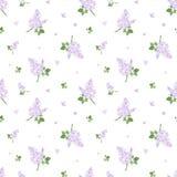 Teste padrão sem emenda com flores lilás. Illust do vetor Fotos de Stock Royalty Free