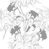Teste padrão sem emenda com flores preto e branco Imagens de Stock