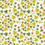 Teste padrão sem emenda com folhas de bordo coloridas Imagem de Stock