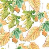 Teste padrão sem emenda com folhas de outono Fotografia de Stock