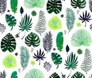 Teste padrão sem emenda com folhas de palmeira exóticas verdes no fundo branco Ilustração do vetor Imagens de Stock