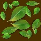 Teste padrão sem emenda com folhas verdes Fotografia de Stock