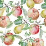 Teste padrão sem emenda com frutas Apple e pera Ilustração da aguarela Imagens de Stock