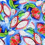 Teste padrão sem emenda com fruto do dragão da aquarela, ilustração stock