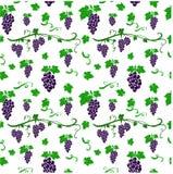 Teste padrão sem emenda com fundo das uvas Foto de Stock
