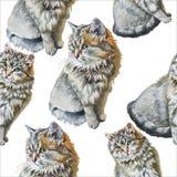 Teste padrão sem emenda com gatos bonitos Imagens de Stock