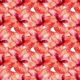 Teste padrão sem emenda com hibiscus vermelho imagens de stock royalty free