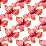 Teste padrão sem emenda com hibiscus vermelho imagem de stock royalty free