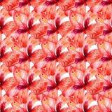Teste padrão sem emenda com hibiscus vermelho foto de stock royalty free