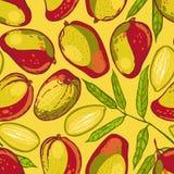 Teste padrão sem emenda com manga Coleção das manga Fruta tropical Fundo tirado mão do alimento ilustração do vetor