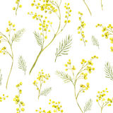 Teste padrão sem emenda com o ramo da aquarela da mimosa Fotos de Stock Royalty Free