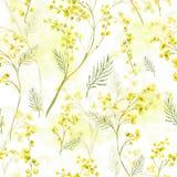 Teste padrão sem emenda com o ramo da aquarela da mimosa Imagens de Stock Royalty Free