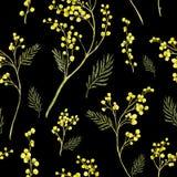 Teste padrão sem emenda com o ramo da aquarela da mimosa Imagens de Stock