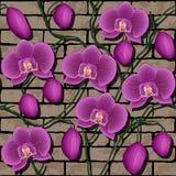 Teste padrão sem emenda com orquídeas Imagem de Stock Royalty Free