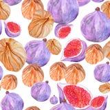 Teste padrão sem emenda com os figos da aquarela frescos e secados ilustração stock