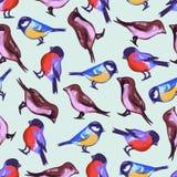 Teste padrão sem emenda com os pássaros pequenos bonitos Imagens de Stock