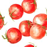 Teste padrão sem emenda com os tomates do desenho da aquarela Imagem de Stock Royalty Free