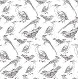 Teste padrão sem emenda com pássaros Fotografia de Stock Royalty Free