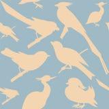 Teste padrão sem emenda com pássaros Foto de Stock Royalty Free