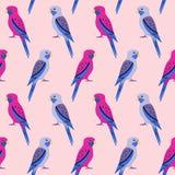 Teste padrão sem emenda com papagaios do rosella Imagem de Stock Royalty Free