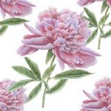 Teste padrão sem emenda com a peônia cor-de-rosa lindo Foto de Stock Royalty Free