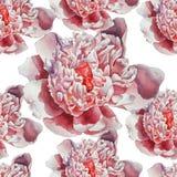 Teste padrão sem emenda com a peônia cor-de-rosa lindo Imagem de Stock Royalty Free