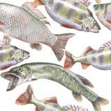 Teste padrão sem emenda com peixes Imagem de Stock Royalty Free