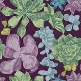 Teste padrão sem emenda com plantas carnudas ilustração royalty free