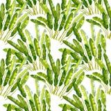 Teste padrão sem emenda com plantas tropicas ilustração do vetor