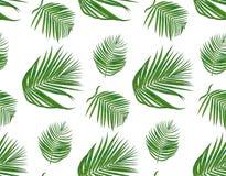Teste padrão sem emenda com ramo semeado tropical da palma da areca, l verde ilustração royalty free