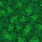 Teste padrão sem emenda com ramos verdes das árvores Fotos de Stock