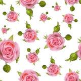 Teste padrão sem emenda com rosas cor-de-rosa em um fundo branco Imagem de Stock Royalty Free