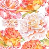 Teste padrão sem emenda com rosas da aguarela Imagem de Stock
