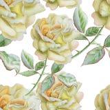 Teste padrão sem emenda com rosas da aguarela Fotos de Stock