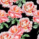 Teste padrão sem emenda com rosas da aguarela Imagens de Stock