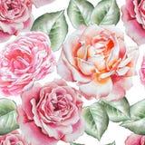 Teste padrão sem emenda com rosas da aguarela Foto de Stock Royalty Free