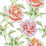 Teste padrão sem emenda com rosas da aguarela Foto de Stock