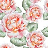 Teste padrão sem emenda com rosas da aguarela Fotos de Stock Royalty Free