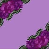 Teste padrão sem emenda com rosas roxas Fotos de Stock