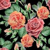 Teste padrão sem emenda com rosas vermelhas Ilustração da aguarela Fotos de Stock