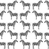 Teste padrão sem emenda com silhueta da zebra Imagem de Stock
