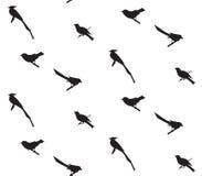 Teste padrão sem emenda com silhuetas dos pássaros Foto de Stock Royalty Free