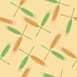 Teste padrão sem emenda com trigo orgânico Fotografia de Stock
