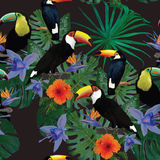 Teste padrão sem emenda com tucanos e flores Mão Imagens de Stock