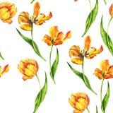Teste padrão sem emenda com tulipas Fotos de Stock