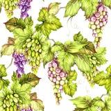 Teste padrão sem emenda com uvas Ilustração da aquarela da tração da mão Fotografia de Stock Royalty Free