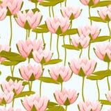 Teste padrão sem emenda cor-de-rosa das flores de lótus do lírio de água Imagem de Stock Royalty Free